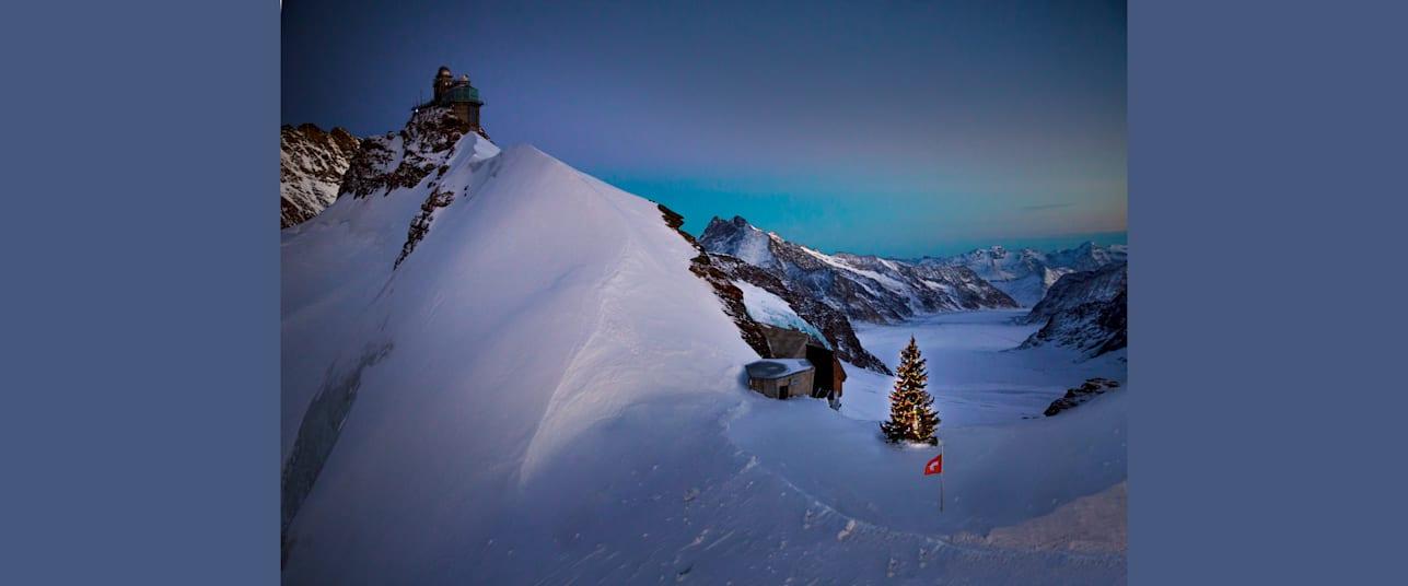 Bild Tannenbaum auf dem Jungfraujoch