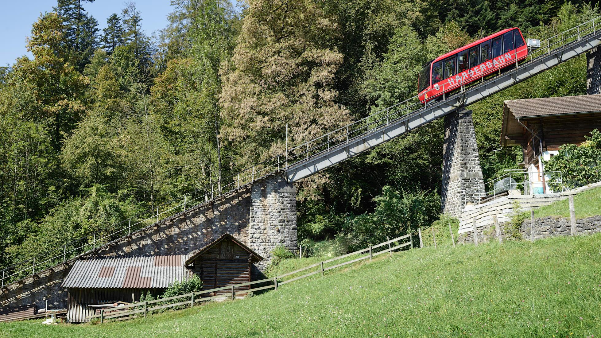 Harderbahn Sommer Wald