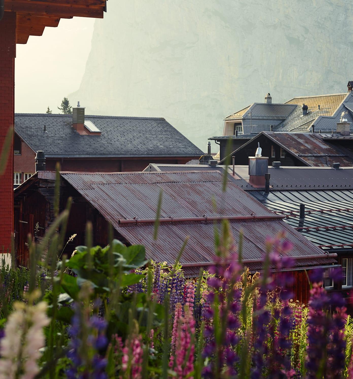 Muerren Sommer Dorf Blumen