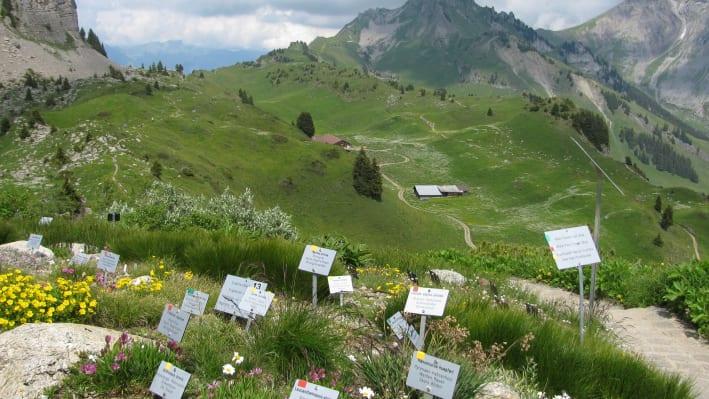 Hiking jungfrauch