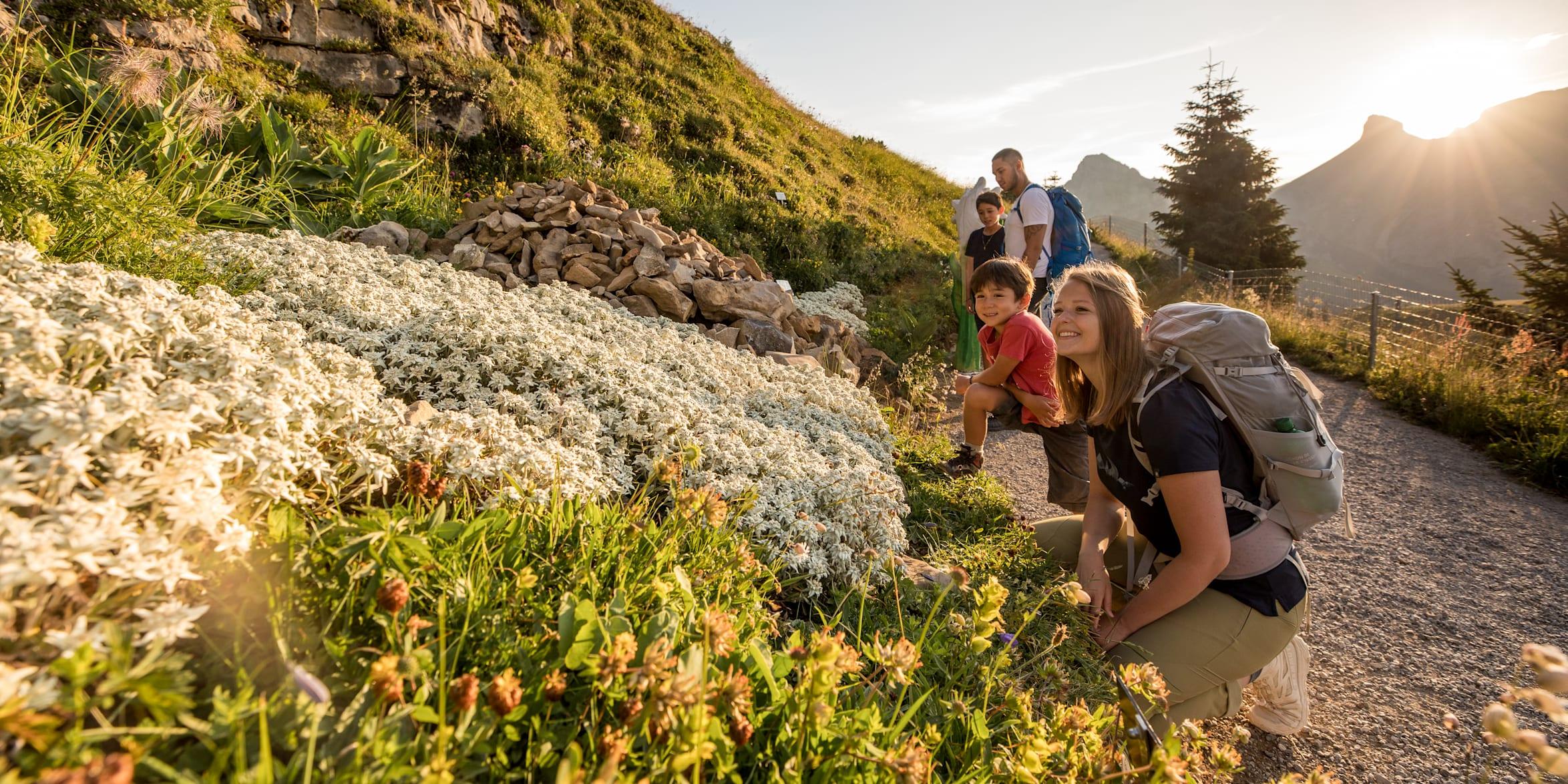Berge, Eiger, Eiger-Mönch-Jungfrau, Erlebnisse-Aktivitaeten, Jungfrau, Mönch, Publikationen, Schynige-Platte, Screen-Content, Wandern, jungfrau.ch