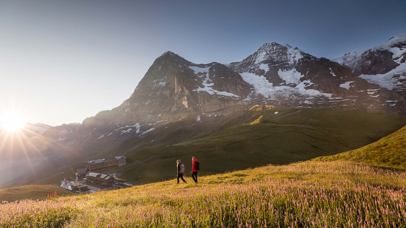Image-database, image-database-Eiger-North-Face, image-database-Kleine-Scheidegg, image-database-nature, image-database-summer, image-database-keywords, image-database-topics, image-database-hiking