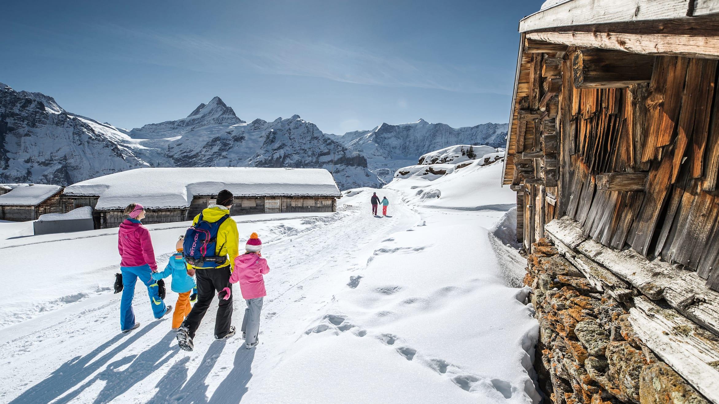 Hiking Sledging Pass Grindelwald Wengen