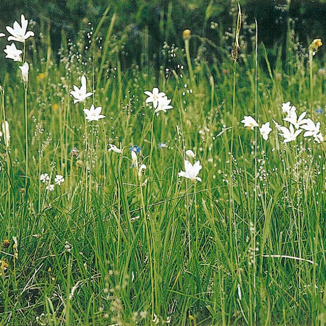 Alpengarten, Erlebnisse-Aktivitaeten, Jahreszeit, Schynige-Platte, Sommer, jungfrau.ch